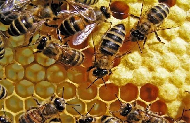 春季中蜂饲养管理要点