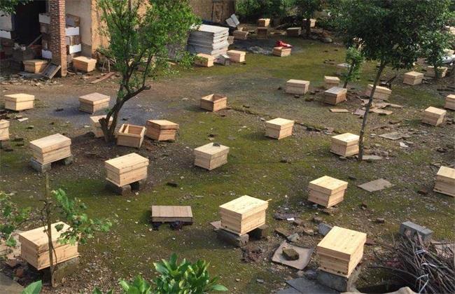 春季 中蜂饲养 管理要点