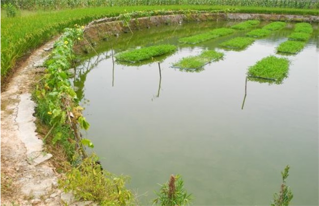 春季鱼塘饲养管理要点