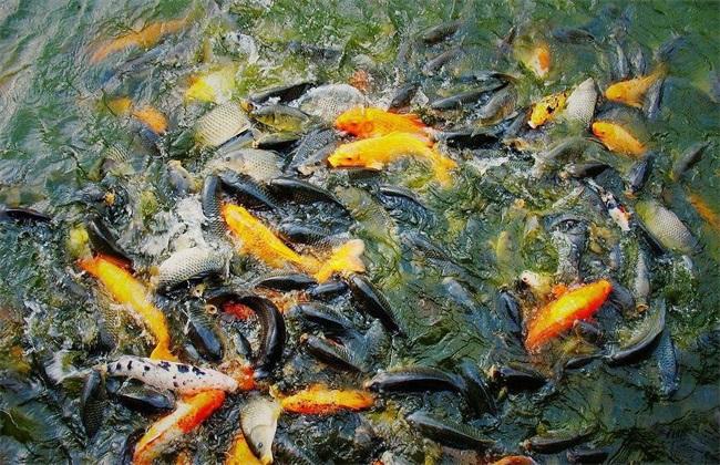 春季 鱼塘 饲养管理要点