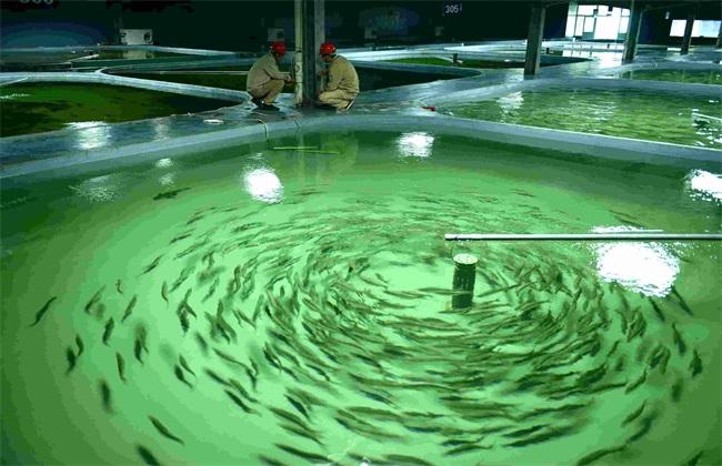 鲥鱼养殖赚钱吗