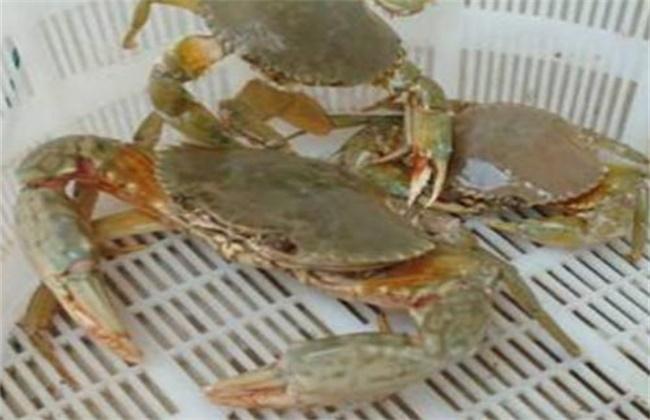 青蟹多少钱一斤