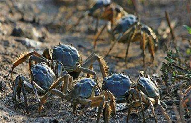 如何预防河蟹逃逸