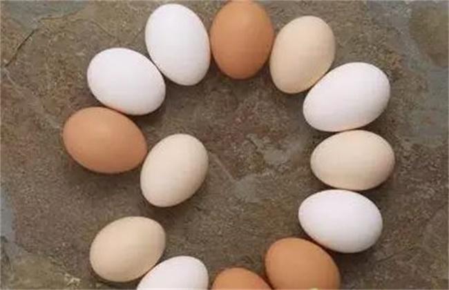 蛋鸡蛋壳变白是什么原因