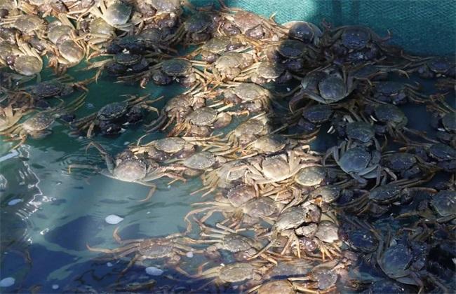 河蟹养殖模式