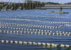 鳗鱼的养殖模式