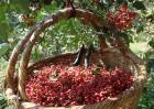 花椒价格多少钱一斤