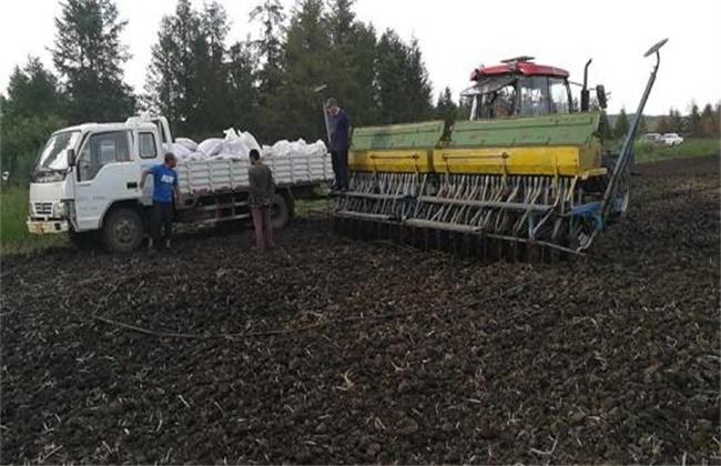 燕麦播种时间和方法