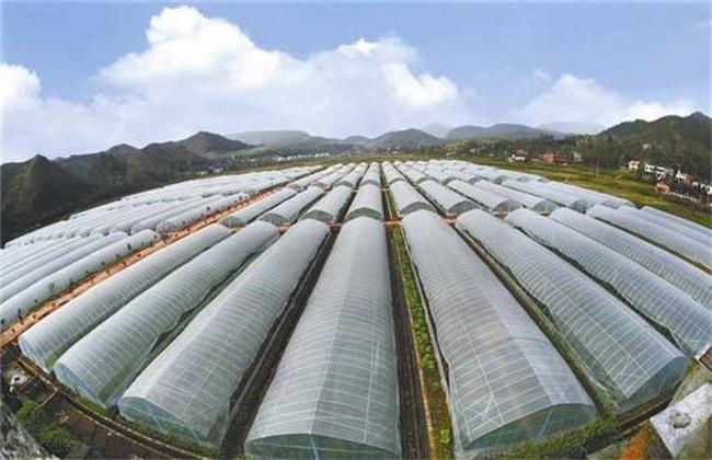 蔬菜大棚种植技术