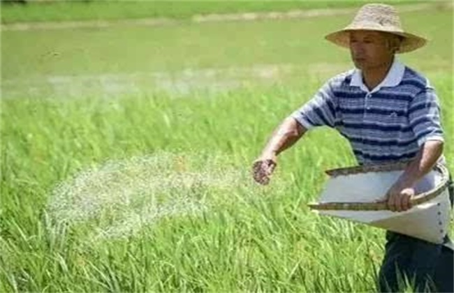 水稻氮肥施用过多处理方法
