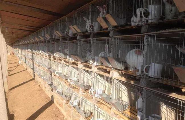 如何提高 兔子 繁殖率