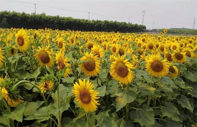 农村种植 什么农作物 赚钱