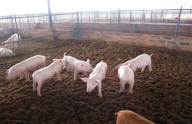 养猪大棚建设