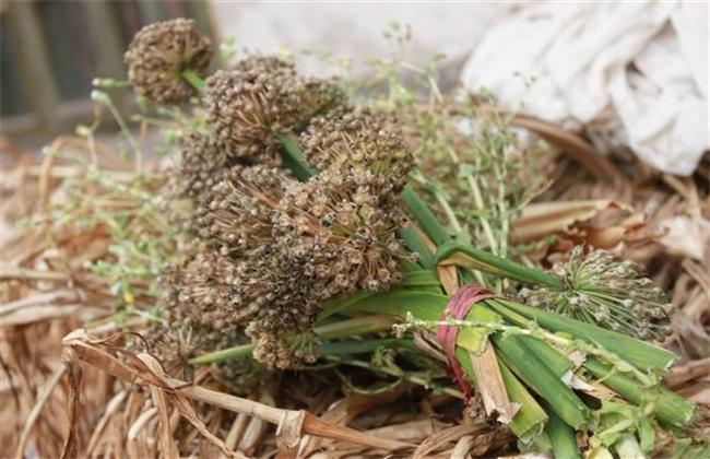 洋葱种子种植方法