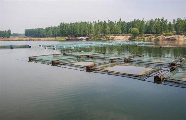 小龙虾 养殖 技术