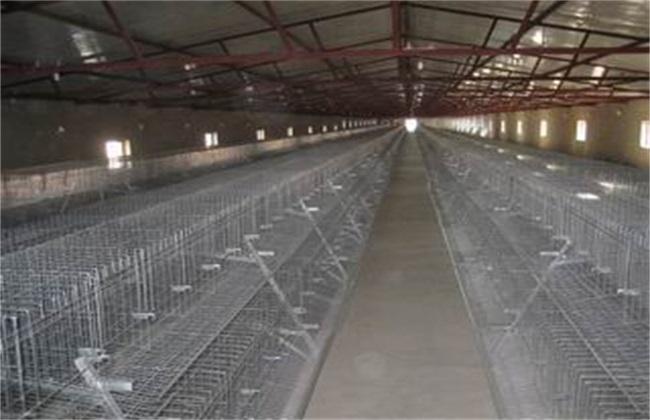 现代养鸡场建设