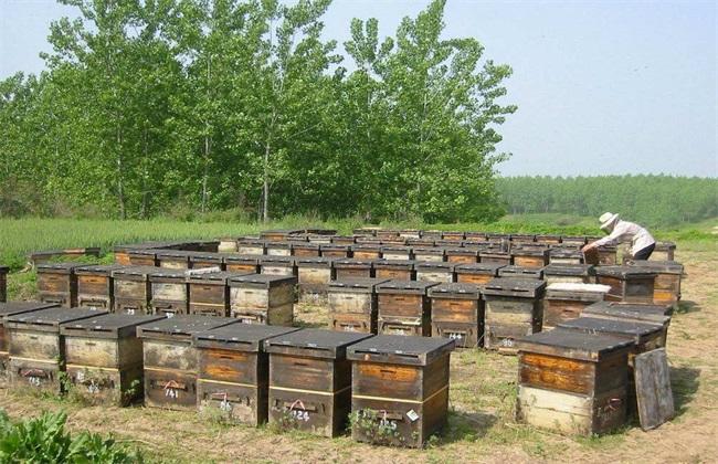 蜜蜂的养殖技术