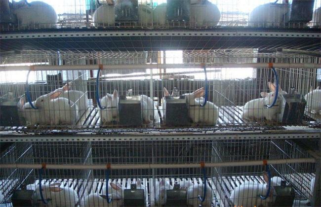 兔子养殖技术