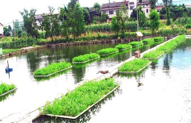 新型 水产养殖 模式