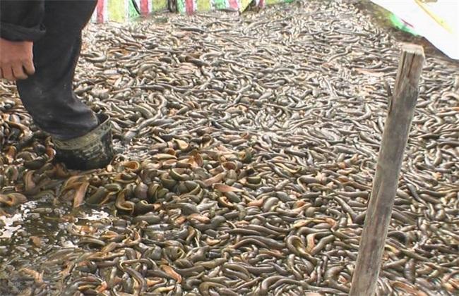 水蛭养殖技术