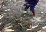 草鱼的养殖技术