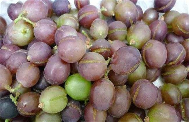 葡萄该如何补钙