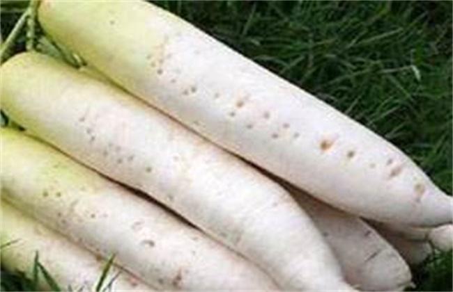 萝卜糠心原因及预防方法