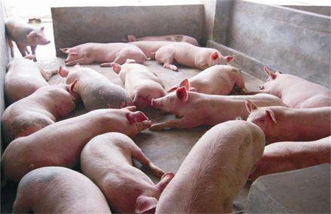 育肥猪长得慢的原因
