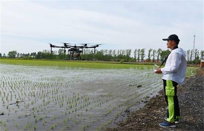 水稻返青期管理技术