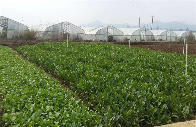 无公害蔬菜 栽培 技术