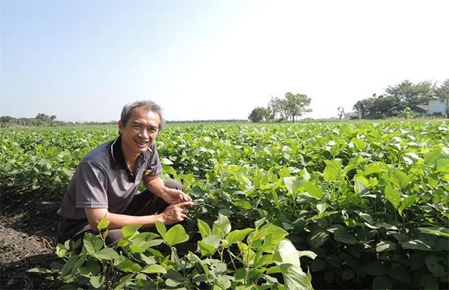 黑豆施肥技术