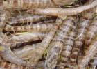 基围虾养殖成本与利润分析