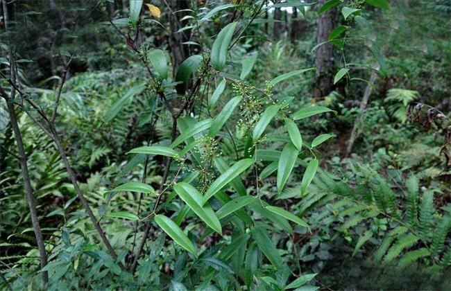 土茯苓种植效益分析