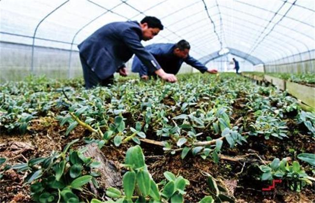 农村创业致富项目