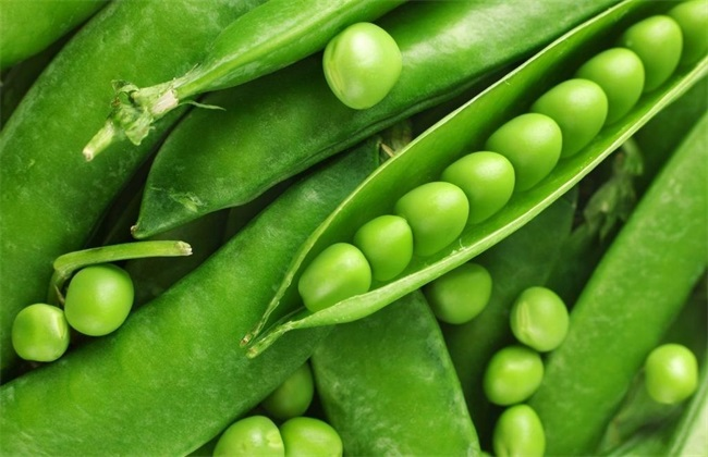 豌豆种植效益分析