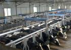 如何提高奶牛的养殖效益