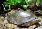 甲鱼养殖效益分析