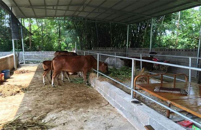 春季 养牛 饲养管理要点