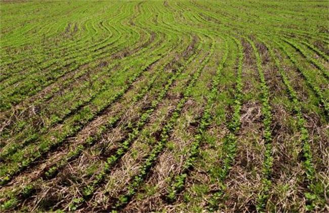 大豆 种植 技术