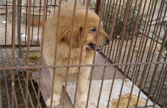 肉狗养殖效益分析