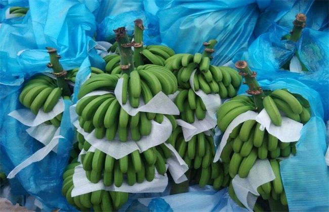 香蕉 常见种类 图片名称