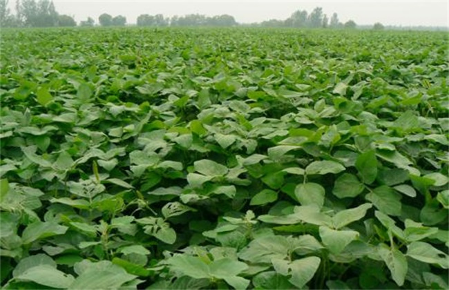 大豆 种植效益 分析