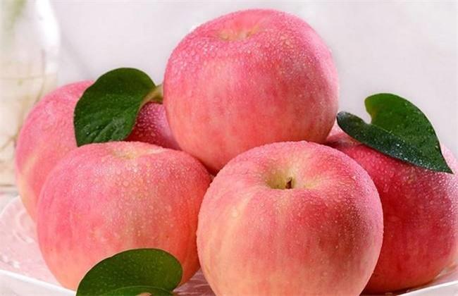 苹果的种类