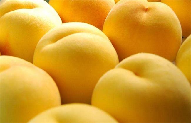 黄桃种植技术