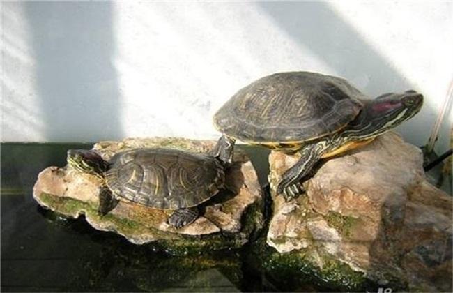 乌龟 怎么养 方法