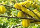 杨桃价格多少钱一斤