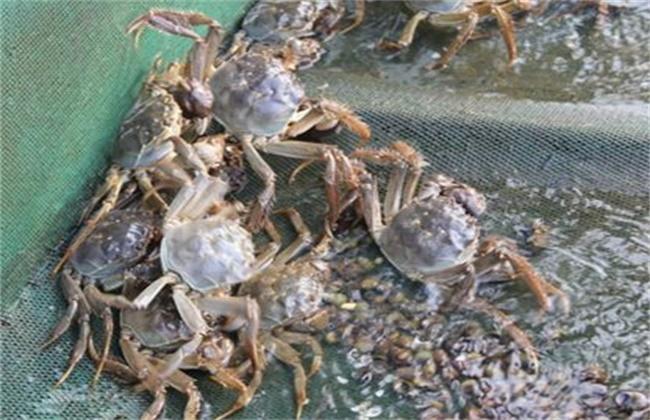 螃蟹养殖四大要点