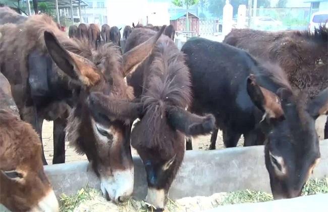 肉驴养殖效益分析