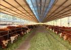 肉牛养殖效益如何