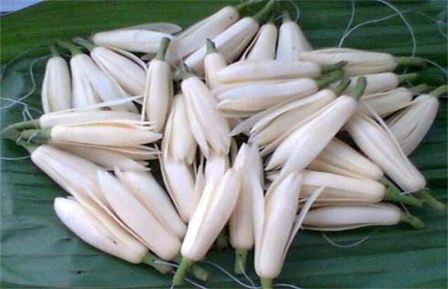 黄桷兰 养殖 方法